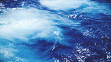 Sea Surf and inhabitants